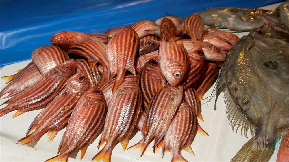 Sea fishing in side types of fish