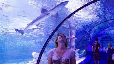 Antalya Aquarium From Alder
