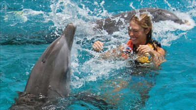 Side mit Delfinen schwimmen