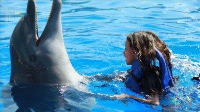 Swim with dolphins in Side Turkey